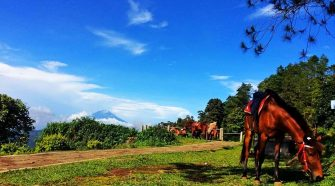 ketep pass sunrise central java tours